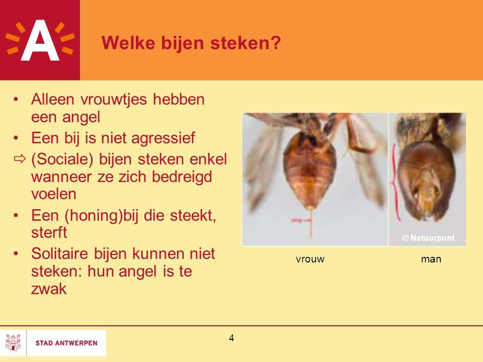 4 Welke bijen steken? Alleen vrouwtjes hebben een angel Een bij is niet agressief  (Sociale) bijen steken enkel wanneer ze zich bedreigd voelen Een (