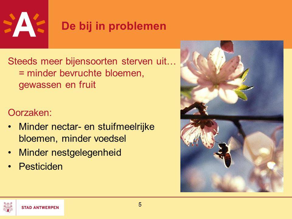 5 De bij in problemen Steeds meer bijensoorten sterven uit… = minder bevruchte bloemen, gewassen en fruit Oorzaken: Minder nectar- en stuifmeelrijke b