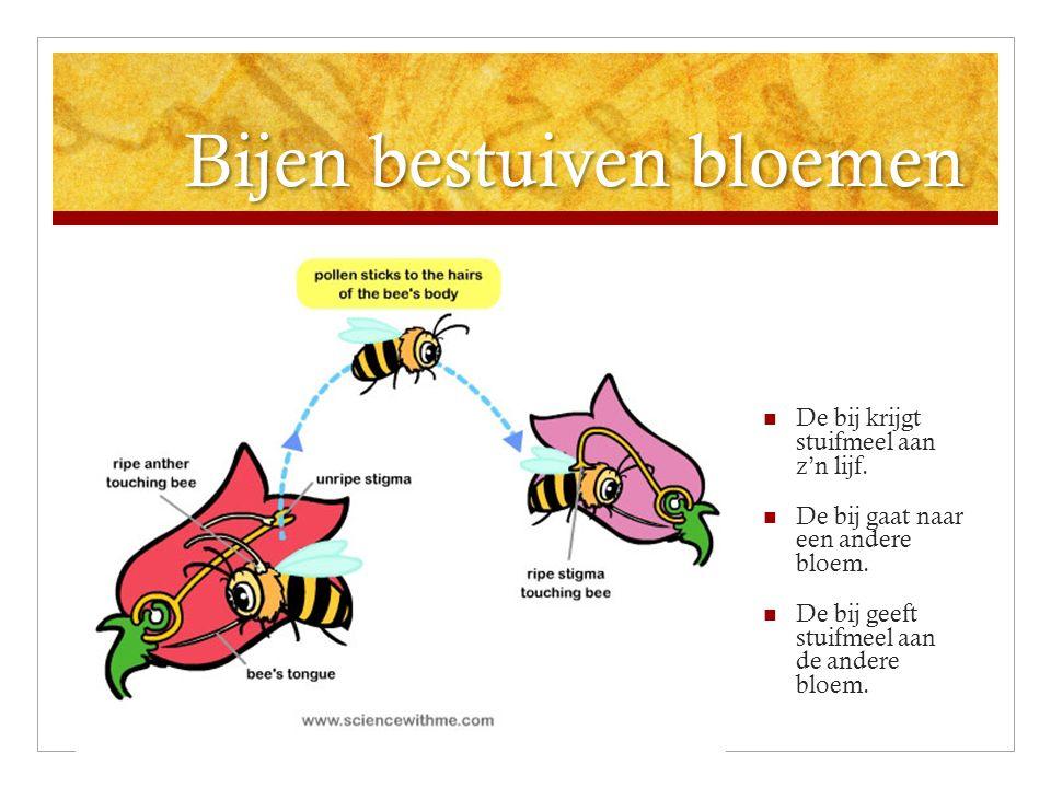 Bijen bestuiven bloemen De bij krijgt stuifmeel aan z'n lijf. De bij gaat naar een andere bloem. De bij geeft stuifmeel aan de andere bloem.