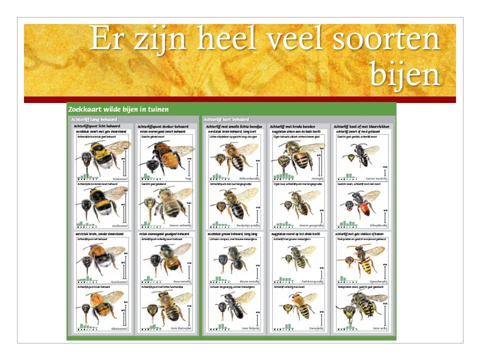 Het gaat niet goed met bijen Er komen minder bijen door: Bestrijdingsmiddelen Teveel tegels in de tuin Te weinig plekken voor bijen om hun eitjes te leggen