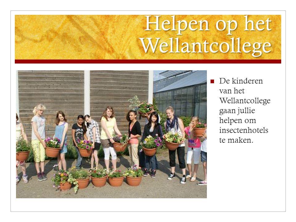 Helpen op het Wellantcollege De kinderen van het Wellantcollege gaan jullie helpen om insectenhotels te maken.