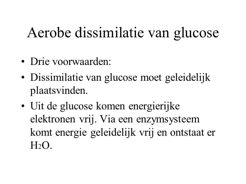 Aerobe dissimilatie van glucose Bij de aerobe dissimilatie van glucose worden glucosemoleculen volledig afgebroken, waarbij CO 2 en H 2 O worden gevor