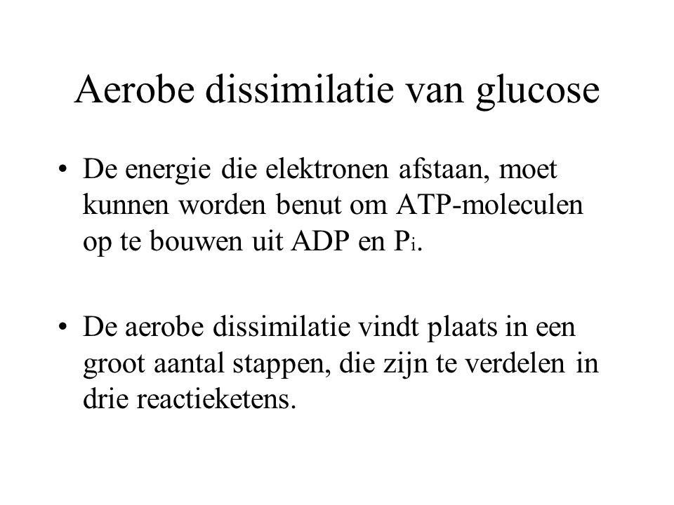 Aerobe dissimilatie van glucose Drie voorwaarden: Dissimilatie van glucose moet geleidelijk plaatsvinden. Uit de glucose komen energierijke elektronen