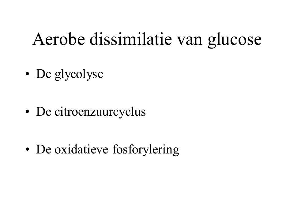 Aerobe dissimilatie van glucose De energie die elektronen afstaan, moet kunnen worden benut om ATP-moleculen op te bouwen uit ADP en P i. De aerobe di