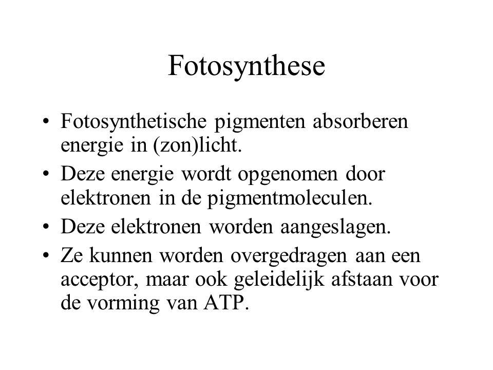 Fotosynthese De koolstofassimilatie die plaats vindt bij foto-autotrofe organismen noemen we fotosynthese. Voor fotosynthese is bladgroen nodig. Bladg
