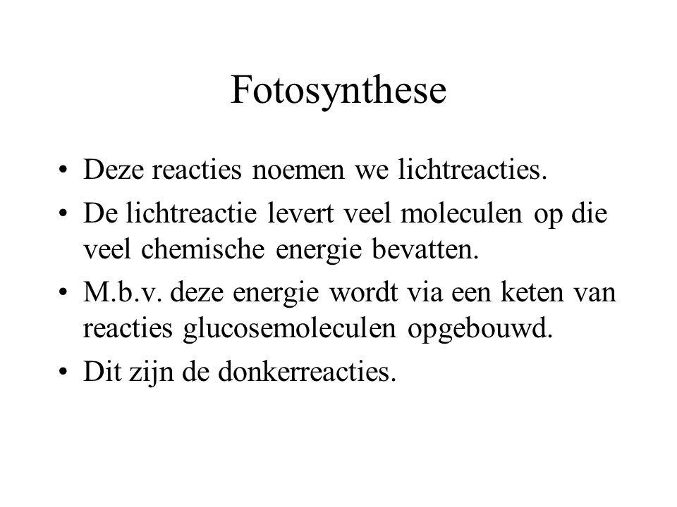 Fotosynthese Fotosynthetische pigmenten absorberen energie in (zon)licht. Deze energie wordt opgenomen door elektronen in de pigmentmoleculen. Deze el