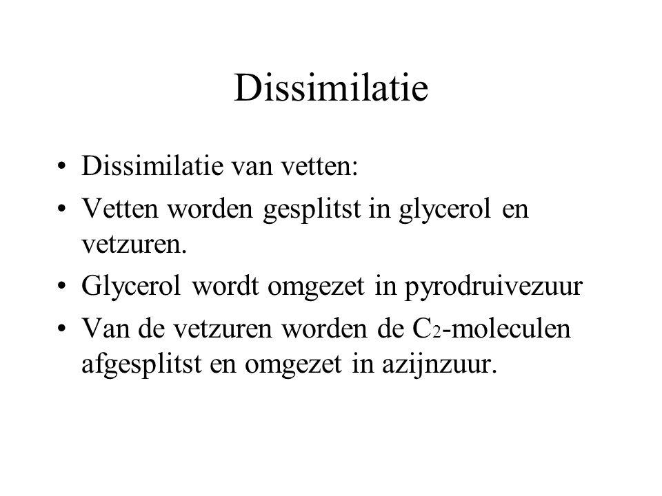 Dissimilatie Dissimilatie van eiwitten: eiwitten worden gesplitst in aminozuren van de aminozuren wordt de aminogroep afgesplitst en omgezet in ammoni