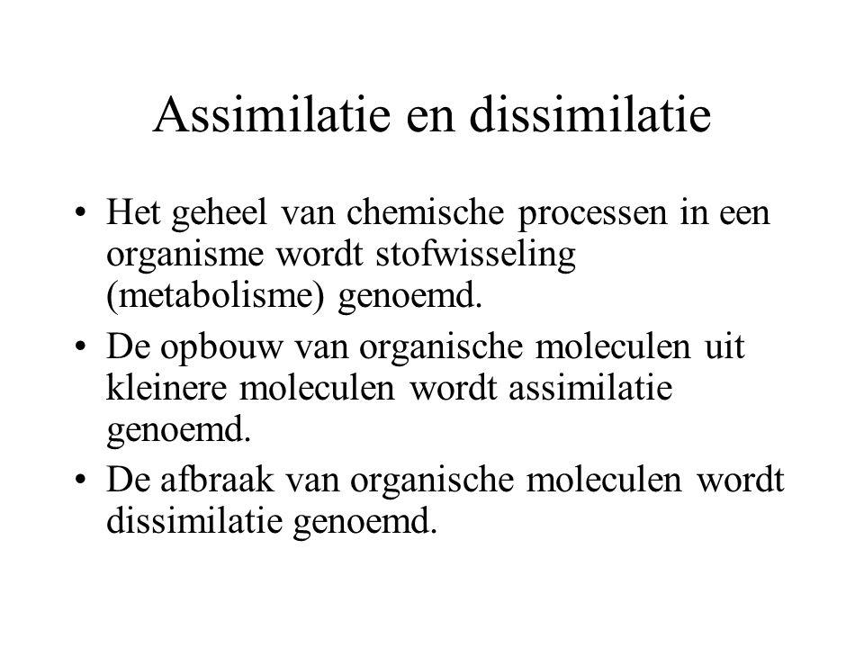 Dissimilatie Dissimilatie van eiwitten: eiwitten worden gesplitst in aminozuren van de aminozuren wordt de aminogroep afgesplitst en omgezet in ammoniak.