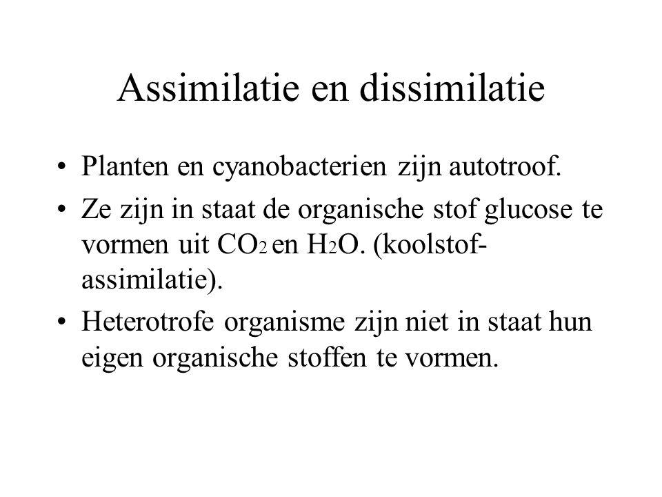 Assimilatie en dissimilatie Planten en cyanobacterien zijn autotroof.