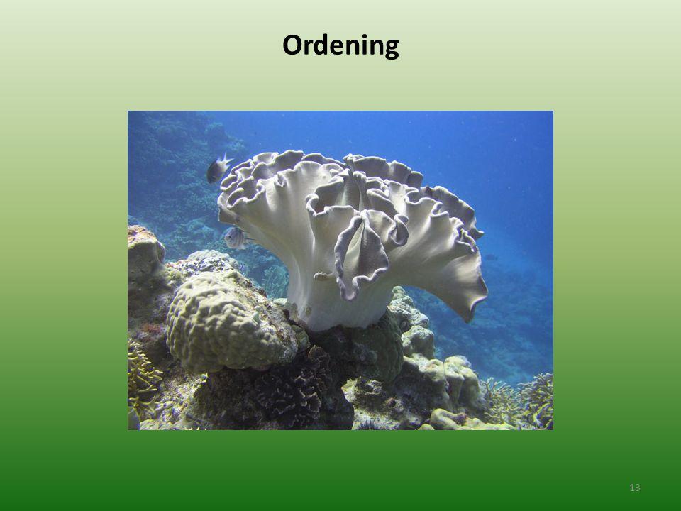 Ordening 13