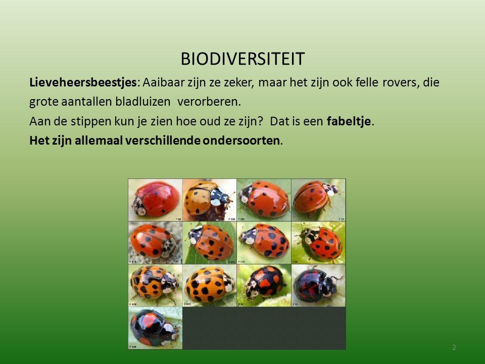 BIODIVERSITEIT Lieveheersbeestjes: Aaibaar zijn ze zeker, maar het zijn ook felle rovers, die grote aantallen bladluizen verorberen. Aan de stippen ku