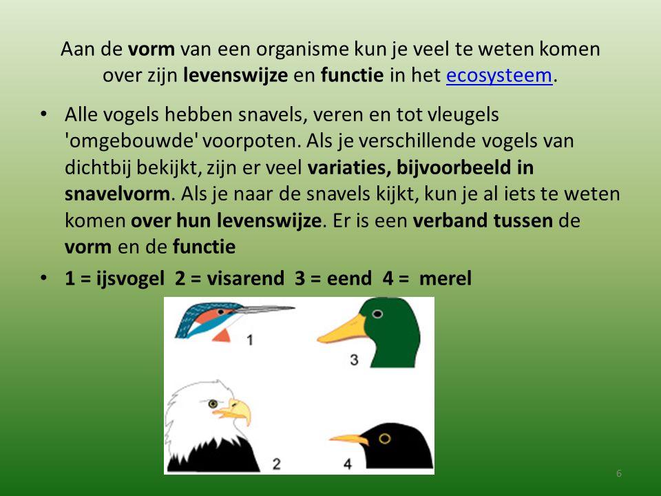Aan de vorm van een organisme kun je veel te weten komen over zijn levenswijze en functie in het ecosysteem.ecosysteem Alle vogels hebben snavels, ver
