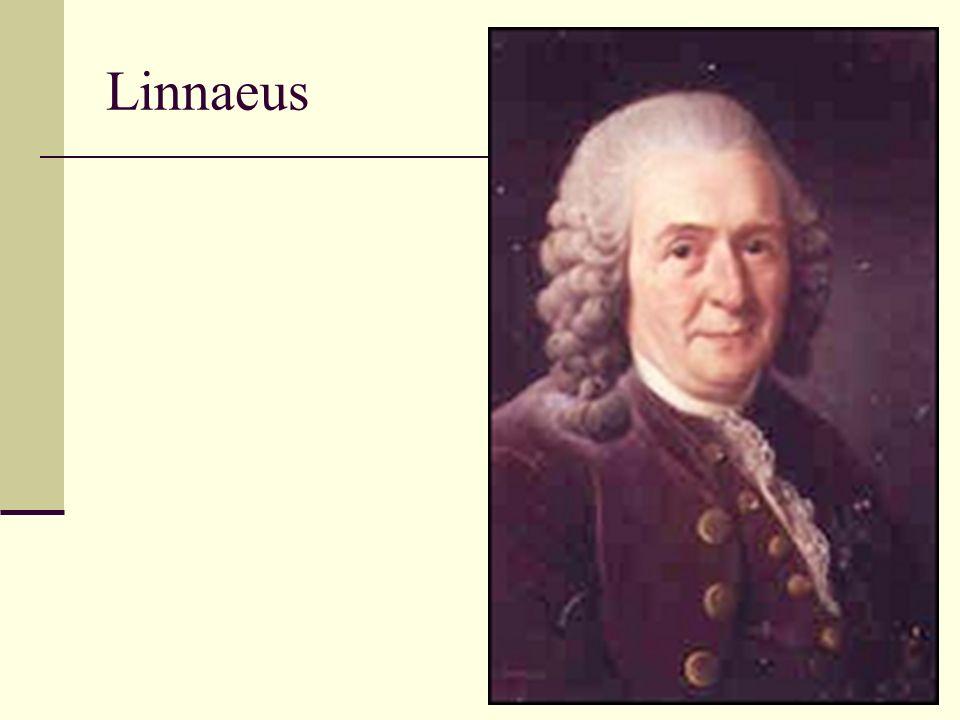 Orde in de chaos Zweedse hofarts: Carolus Linnaeus (geb.