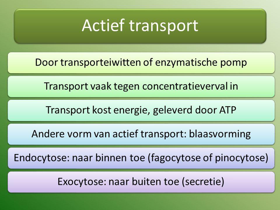 Actief transport Door transporteiwitten of enzymatische pompTransport vaak tegen concentratieverval inTransport kost energie, geleverd door ATPAndere
