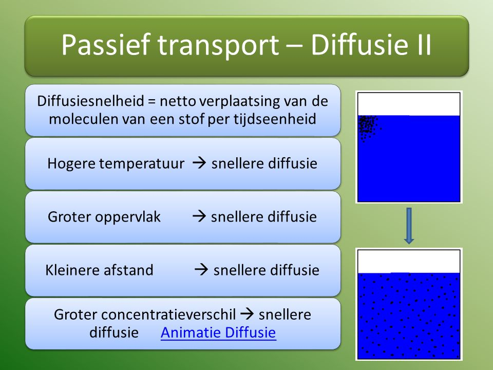 Passief transport – Diffusie II Diffusiesnelheid = netto verplaatsing van de moleculen van een stof per tijdseenheid Hogere temperatuur  snellere diffusieGroter oppervlak  snellere diffusieKleinere afstand  snellere diffusie Groter concentratieverschil  snellere diffusie Animatie DiffusieAnimatie Diffusie