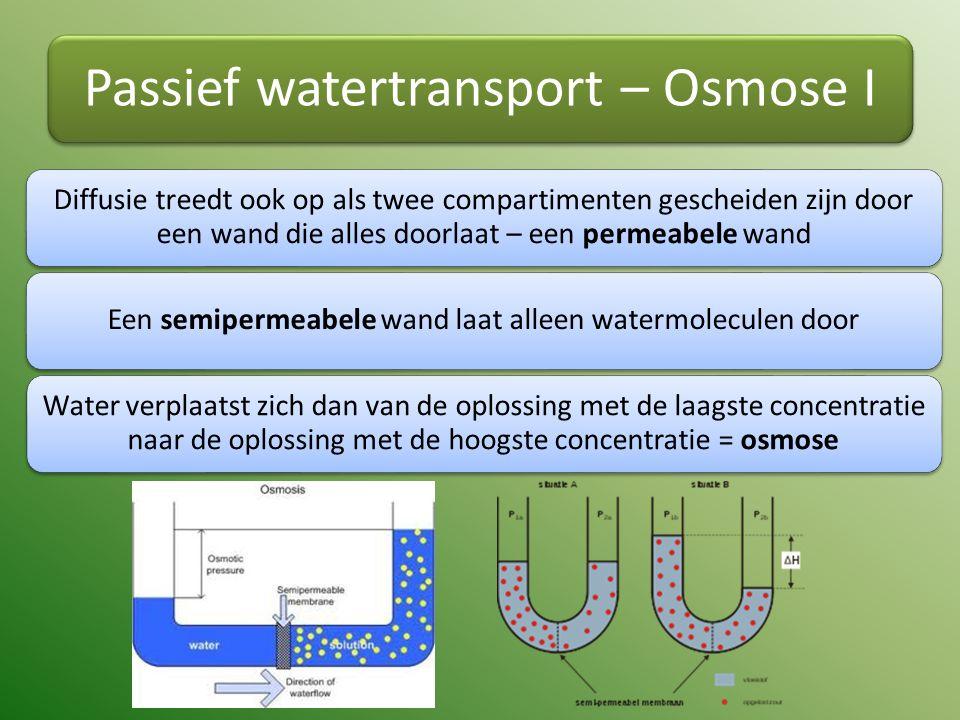 Passief watertransport – Osmose I Diffusie treedt ook op als twee compartimenten gescheiden zijn door een wand die alles doorlaat – een permeabele wand Een semipermeabele wand laat alleen watermoleculen door Water verplaatst zich dan van de oplossing met de laagste concentratie naar de oplossing met de hoogste concentratie = osmose