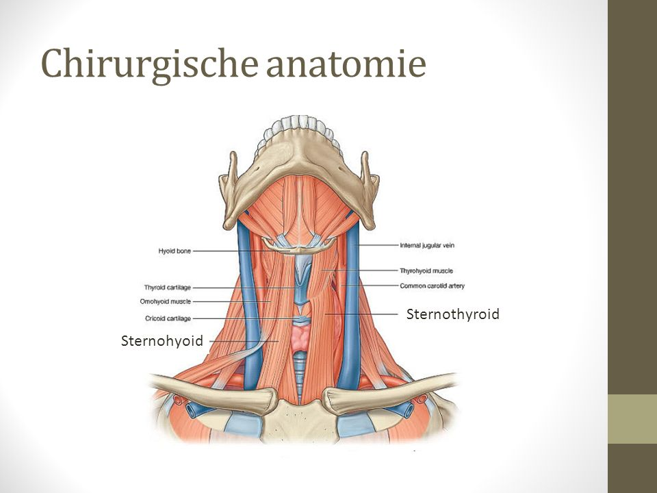 Chirurgische anatomie Sternothyroid Sternohyoid