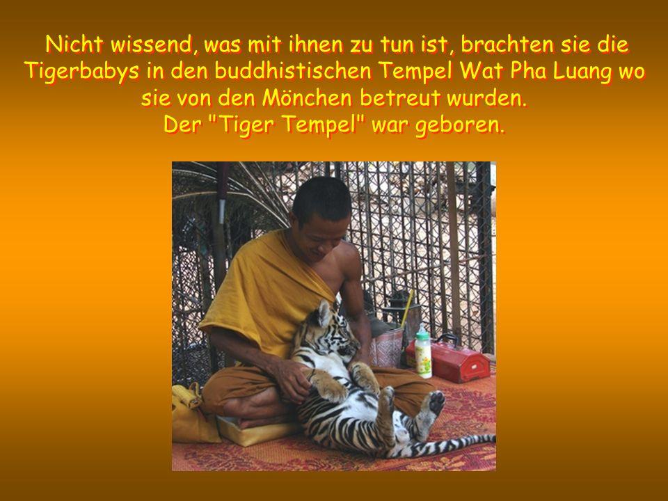 Niet wetend wat ermee aan te vangen, brachten ze hen naar de boeddhistische tempel Wat Pha Luang waar ze opgevangen en verzorgd werden door de monniken.