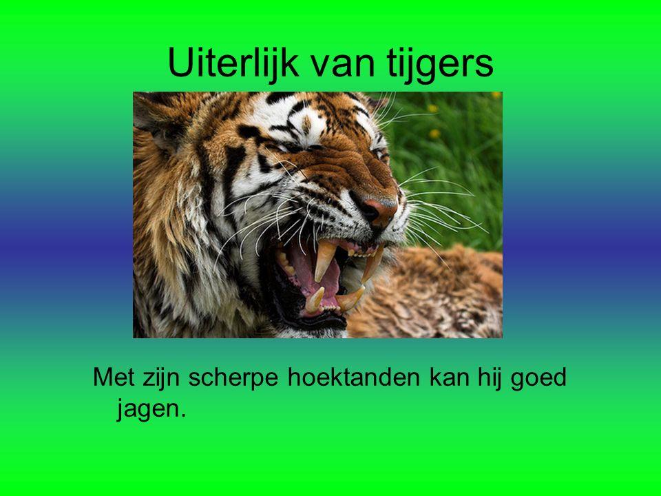 Uiterlijk van tijgers Met zijn scherpe hoektanden kan hij goed jagen.