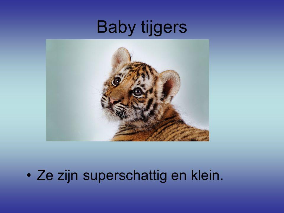 Baby tijgers Ze zijn superschattig en klein.