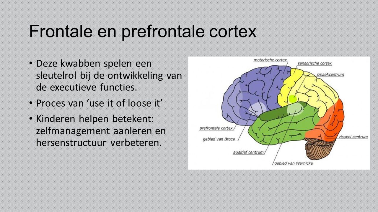 Frontale en prefrontale cortex Deze kwabben spelen een sleutelrol bij de ontwikkeling van de executieve functies. Proces van 'use it of loose it' Kind