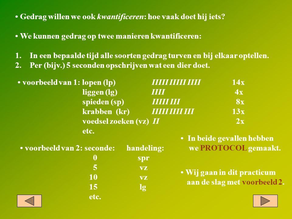 Gedrag willen we ook kwantificeren: hoe vaak doet hij iets? voorbeeld van 1: lopen (lp) IIIII IIIII IIII 14x liggen (lg) IIII 4x spieden (sp) IIIII II