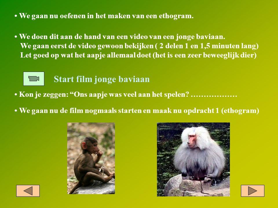 """We gaan nu oefenen in het maken van een ethogram. Start film jonge baviaan Kon je zeggen: """"Ons aapje was veel aan het spelen? ……………… We doen dit aan d"""