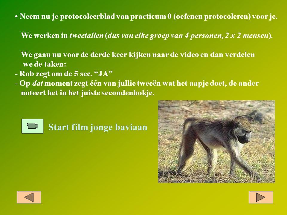 Start film jonge baviaan Neem nu je protocoleerblad van practicum 0 (oefenen protocoleren) voor je. We werken in tweetallen (dus van elke groep van 4