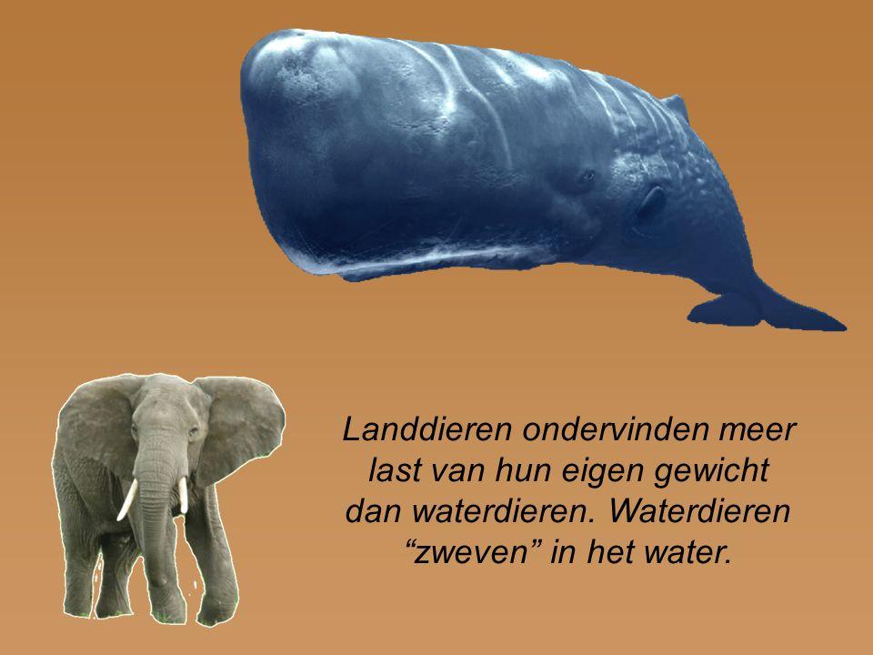 """Landdieren ondervinden meer last van hun eigen gewicht dan waterdieren. Waterdieren """"zweven"""" in het water."""