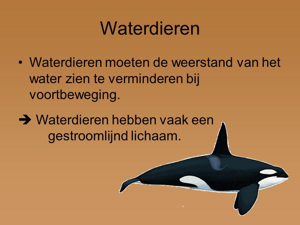 Waterdieren Waterdieren moeten de weerstand van het water zien te verminderen bij voortbeweging.  Waterdieren hebben vaak een gestroomlijnd lichaam.