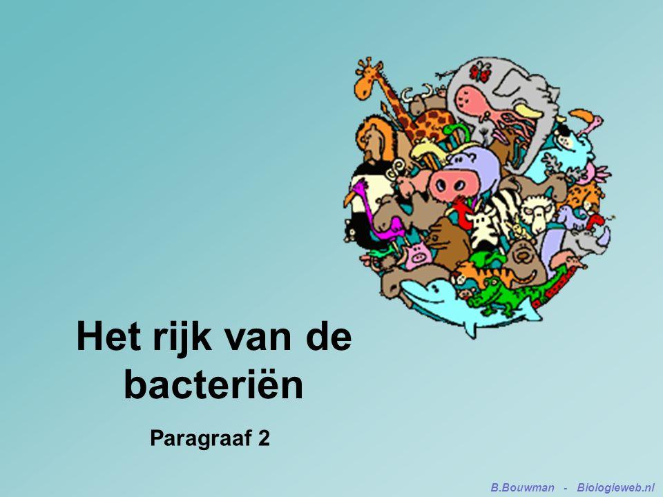 Het rijk van de bacteriën Paragraaf 2 B.Bouwman - Biologieweb.nl