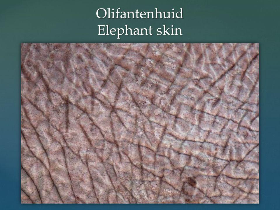 Olifantenhuid Elephant skin