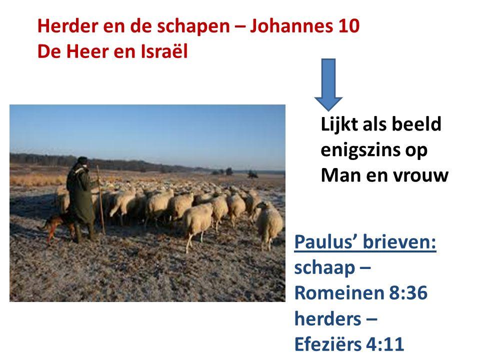 Herder en de schapen – Johannes 10 De Heer en Israël Lijkt als beeld enigszins op Man en vrouw Paulus' brieven: schaap – Romeinen 8:36 herders – Efezi