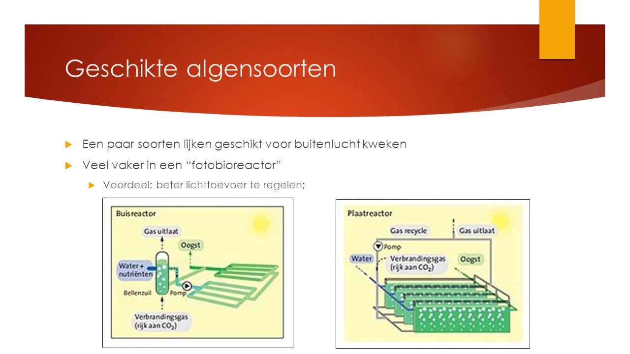 """Geschikte algensoorten  Een paar soorten lijken geschikt voor buitenlucht kweken  Veel vaker in een """"fotobioreactor""""  Voordeel: beter lichttoevoer"""
