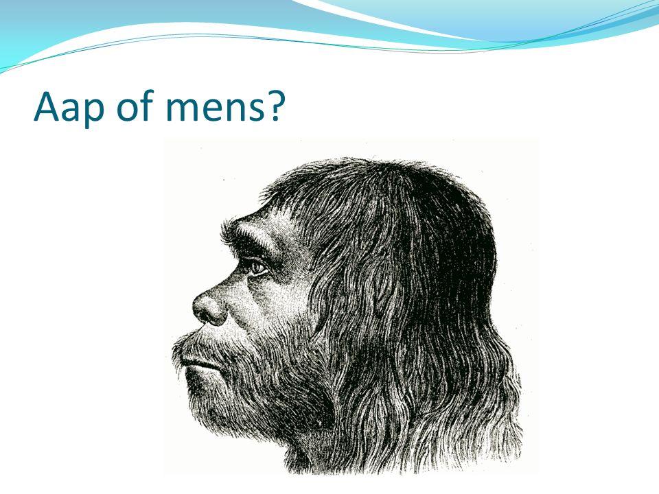 Aap of mens?