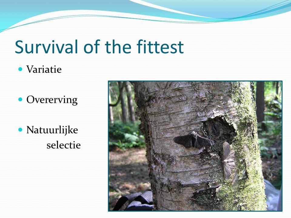Survival of the fittest Variatie Overerving Natuurlijke selectie