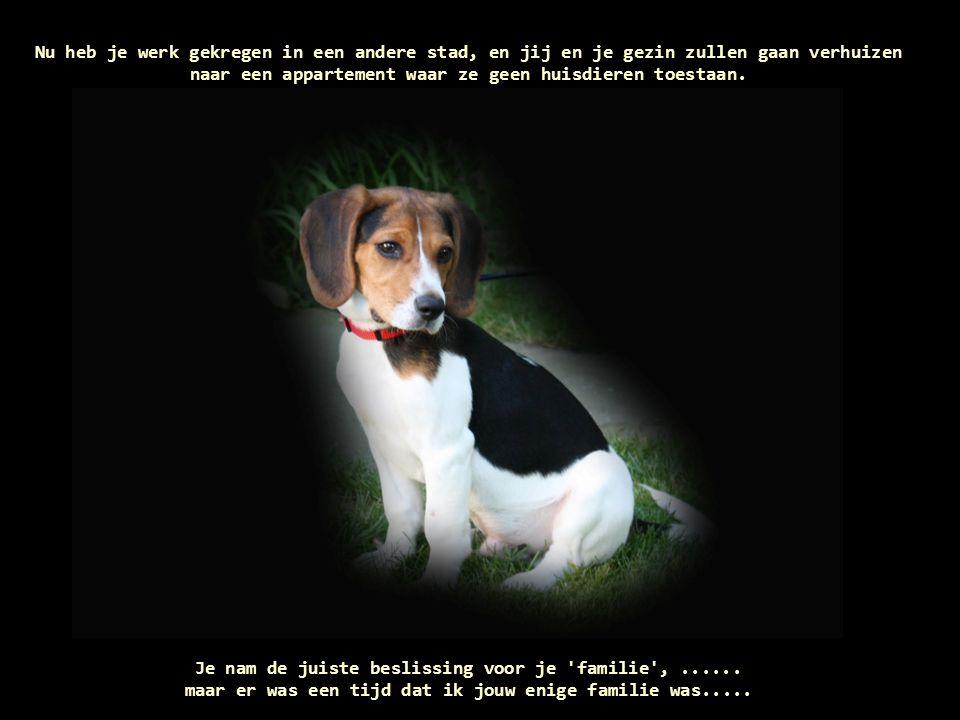Er was ooit een tijd dat andere mensen je vroegen of je een hond had en dat je op dat moment mijn foto uit je knip te voorschijn haalde en hen verhalen vertelde over mij.