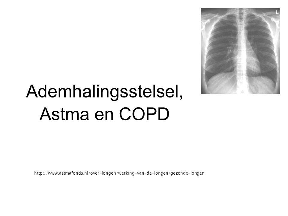 Ademhalingsstelsel, Astma en COPD http://www.astmafonds.nl/over-longen/werking-van-de-longen/gezonde-longen