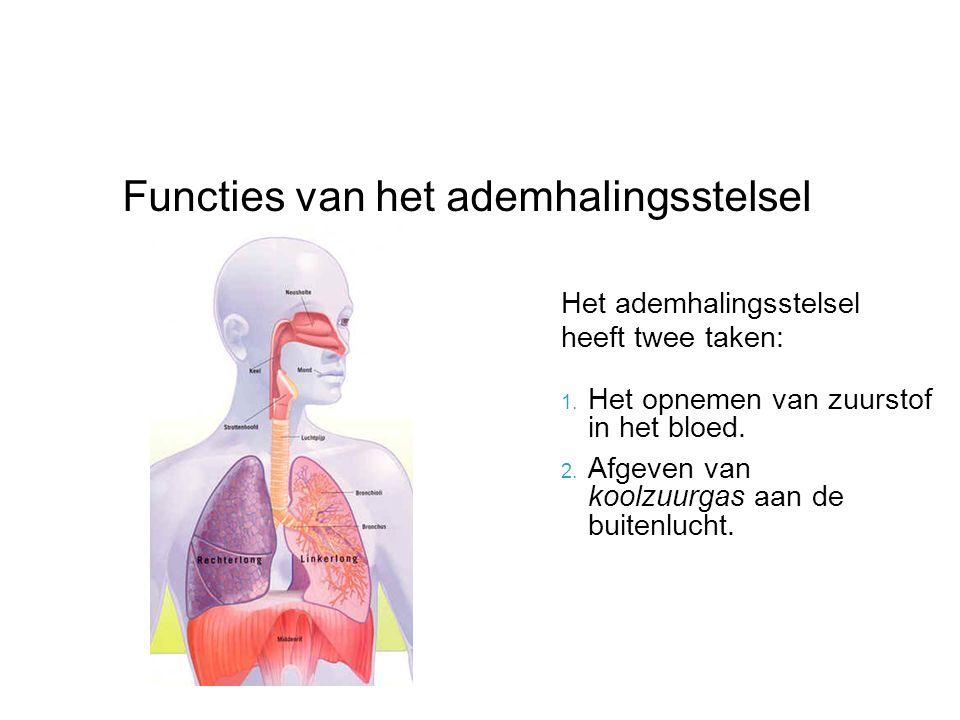 Het ademhalingsstelsel heeft twee taken: 1. Het opnemen van zuurstof in het bloed. 2. Afgeven van koolzuurgas aan de buitenlucht. Functies van het ade