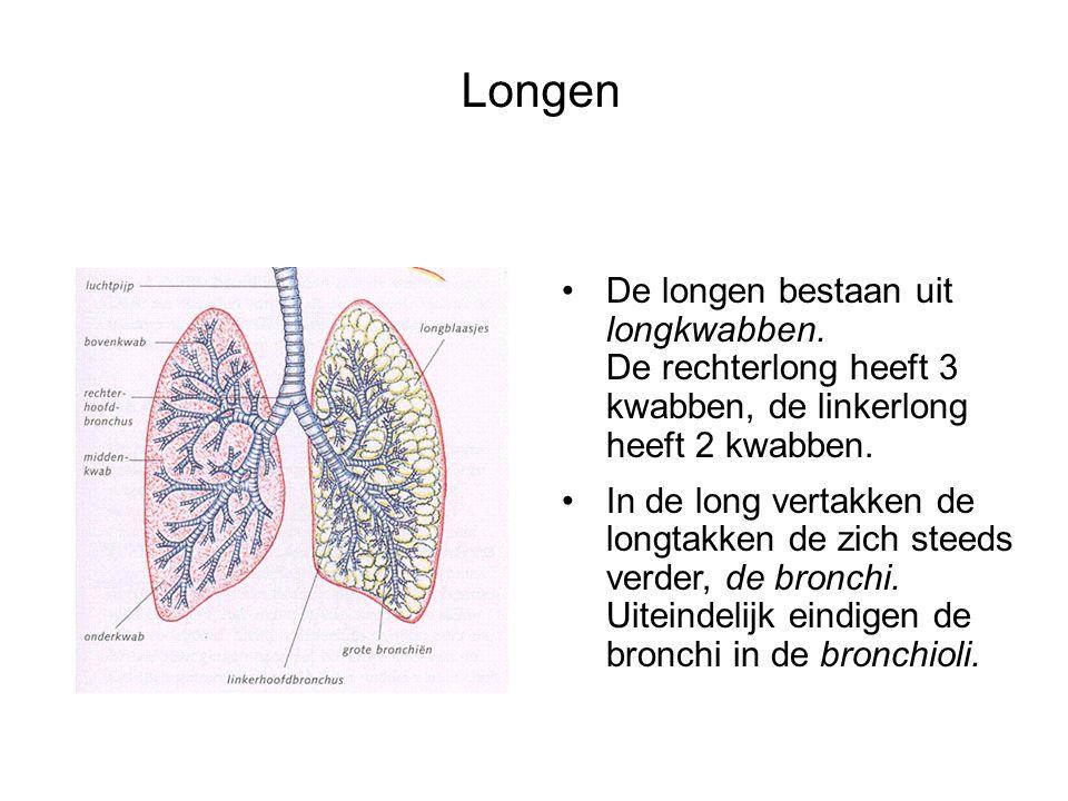 Longen De longen bestaan uit longkwabben. De rechterlong heeft 3 kwabben, de linkerlong heeft 2 kwabben. In de long vertakken de longtakken de zich st