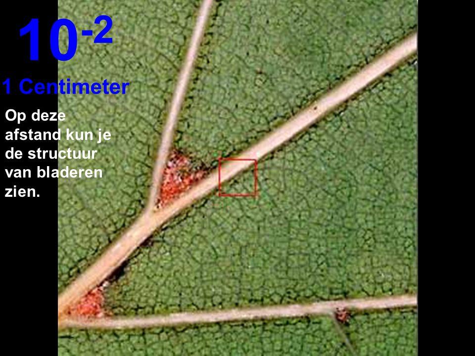 Dichterbij op 10 cm...kunnen we de bladeren omlijnen. 10 -1 10 Centimeter