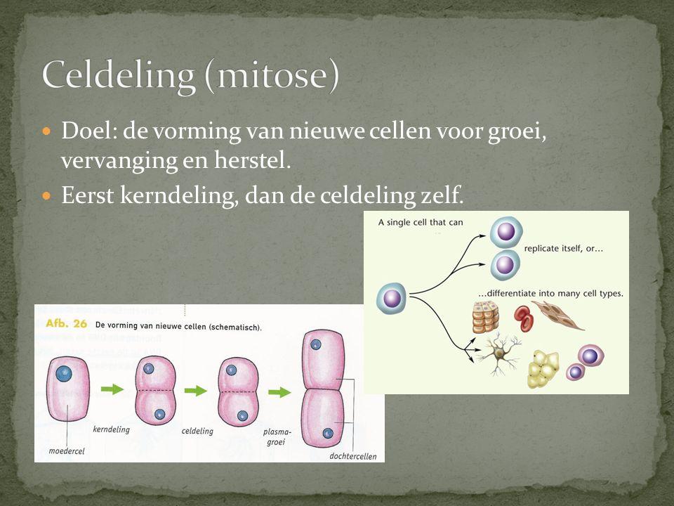 Doel: de vorming van nieuwe cellen voor groei, vervanging en herstel. Eerst kerndeling, dan de celdeling zelf.