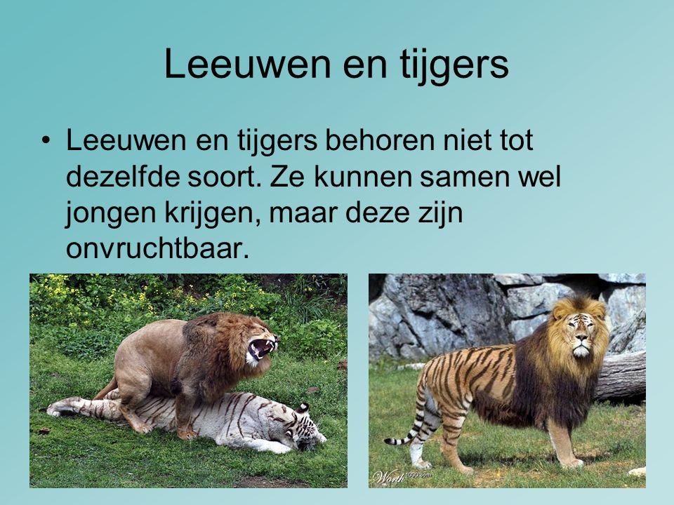 Leeuwen en tijgers Leeuwen en tijgers behoren niet tot dezelfde soort. Ze kunnen samen wel jongen krijgen, maar deze zijn onvruchtbaar.