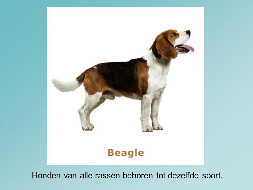 Honden van alle rassen behoren tot dezelfde soort.