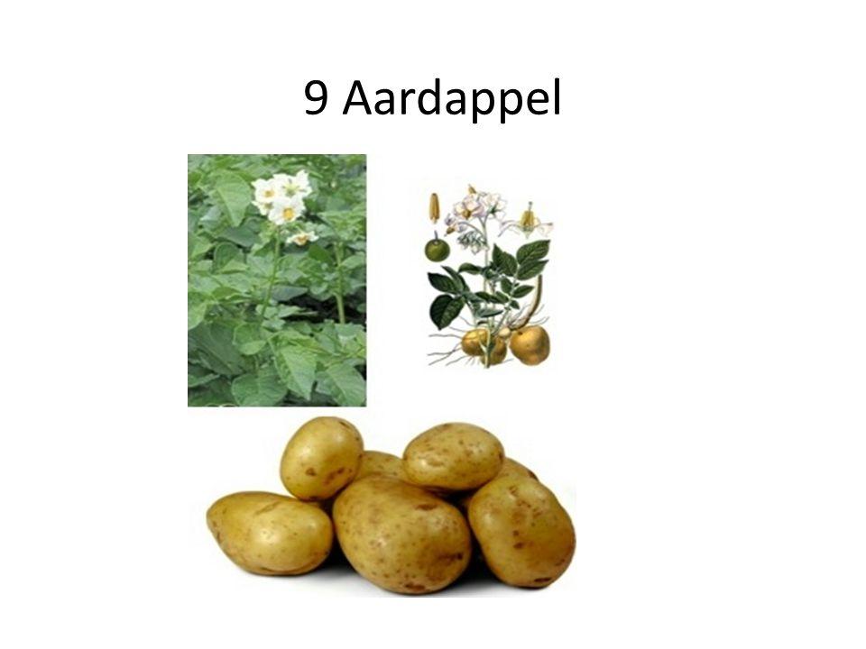 9 Aardappel