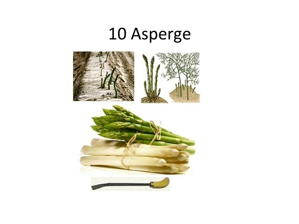 10 Asperge
