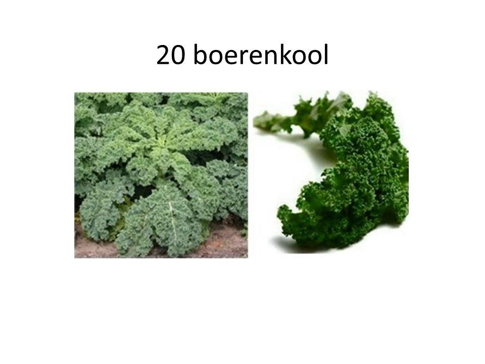 20 boerenkool