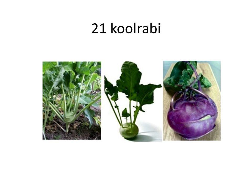 21 koolrabi