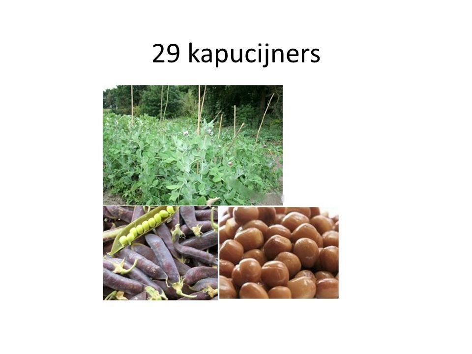 29 kapucijners 28 erwt