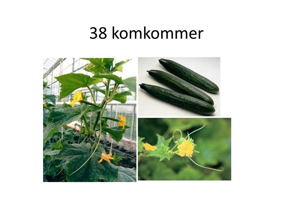 38 komkommer